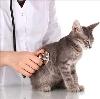 Ветеринарные клиники в Объячево
